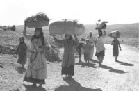 Refugees and the Arab Charter on Human Rights
